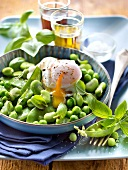 Pea,broad bean and swwet pea salad with a poached egg