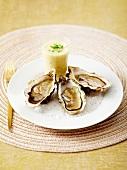 Austern und Pastinakensuppe