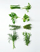 Composition of fresh herbs on a white background