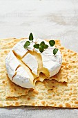 Camembert on oregano bread
