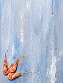 Shrimps on a blue background