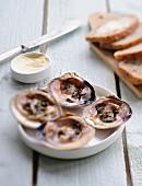 Tasting clams