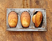 Yoghurt Madeleines in a tin mould
