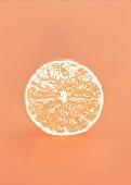Mandarinenscheibe