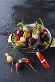 Assortment of multicolored radishes