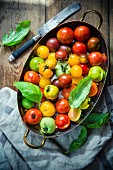 Mixed tomatoes and basil in a large tin dish
