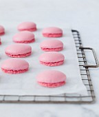 Pink Macaron shells on a baking rack covered with wax paper
