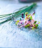 Schnittlauch und gemischte Keimlinge (Brokkoli, Radieschen und Alfalfa)