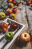 Herbstliches Stilleben mit Äpfeln und Birnen