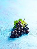 Blaue Weintrauben auf hellblauem Untergrund