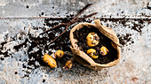 Geerntete Kartoffeln im Leinensack mit Erde