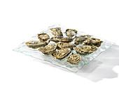 Austern auf Servierplatte