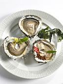 Austern aus der Bretagne auf Teller