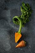 Heirloom-Karotte mit Grün