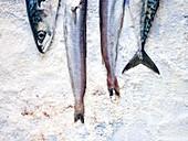 Mackerel and horse mackerel on ice