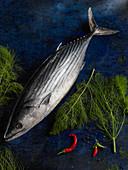 Ein frischer weißer Thunfisch