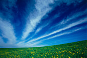 Clouds over sunny meadow