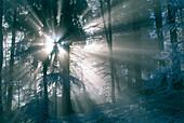 Sun beams in a wood