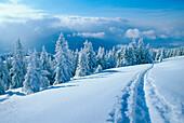 Tracks in winter scenery, Upper Bavaria, Germany