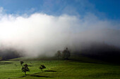 Morning fog, Kirnbachtal, Black Forest, Baden-Wuerttemberg, Germany