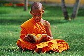 Young monk reading on a meadow, Phuket, Thailand, Asia