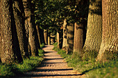 Tree lined allee with path, Landscape, Nature