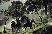 Pilgrims riding through sunlit landscape, Andujar, Jaen province, Andalusia, Spain, Europe