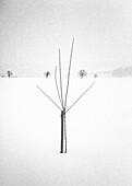 Baeumchen im Schnee