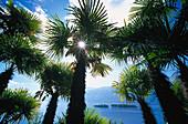 Sunlight shining through palm trees, Lago Maggiore, Ticino, Switzerland