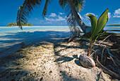 Einsame Insel, Rangiroa Atoll, Tuamotu, French Polynesia