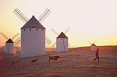 Farmer with animals, windmills, La Mancha, Spain