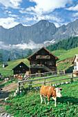 Cows in front of Schlitzenalm, Dachsteingebiet, near Salzburg, Austria