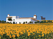 Farmhouse with sunflower field, Osborne bull, unofficial national symbol of Spain, landmarks of public domain since 1994, Province of Huelva, Andalusia, Spain