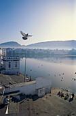 Priester und Tauben morgens am Heiligen See, Pushkar, Rajasthan, Indien