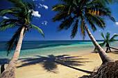 Sandy beach with coconut palms, Dominican Republic, Caribbean