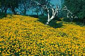 Frühlingslandschaft bei Kato, Lefkara Zypern