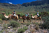 Camel ride in La Baranda-Camel-Safari-Park, Fataga, Gran Canaria, Canary Islands, Spain