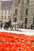 Fiacra passing flowerbed, Vienna, Austria