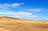 Dry fields, landscape field