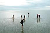 People walking in Wadden Sea, Ameland, Netherlands