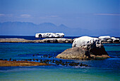 Boulders in front of Cape of Good Hope, Boulders Beach, Cape Town, South Africa, Africa