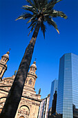 Palm tree in front of the cathedral and an office building, Plaza de Armas, Santiago, Chile