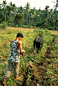 Traditional agriculture, Negros, Dumaguette Philippines, Asia