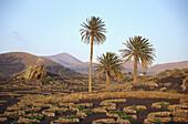 Landschaft, Yaiza, Lanzarote Kanarische Inseln, Spanien