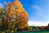 Peacham, Caledonia County Vermont, USA