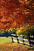 Wooden fence under autumnal trees, Old Bennington, Vermont, USA, America