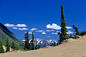 Carcross Desert under blue sky, Carcross, Yukon Territory, Canada, America