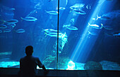 Visitor looking at fishes at Two Oceans Aquarium, Capetown, South Africa, Africa