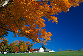 Houses and trees of Shakerdorf under blue sky, Canterbury, New Hampshire, New England, America