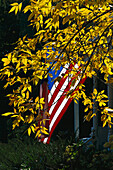 American flag behind autumnal leaves in the sunlight, New England, USA, America